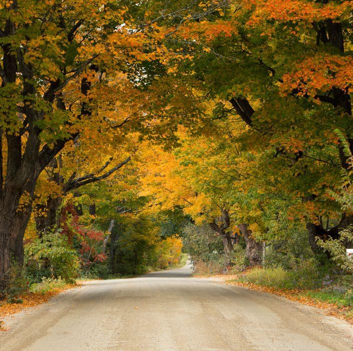 Green & Yellow, Vermont